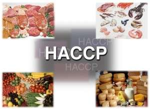 HACCP coordinator