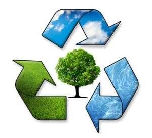 environmental coordinator